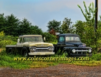 Field of Fords