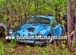 Karmann Ghia lost in the woods